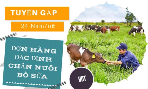 TUYỂN GẤP!!! Đơn hàng đặc định chăn nuôi bò sữa tại Aichi-LƯƠNG KHỦNG